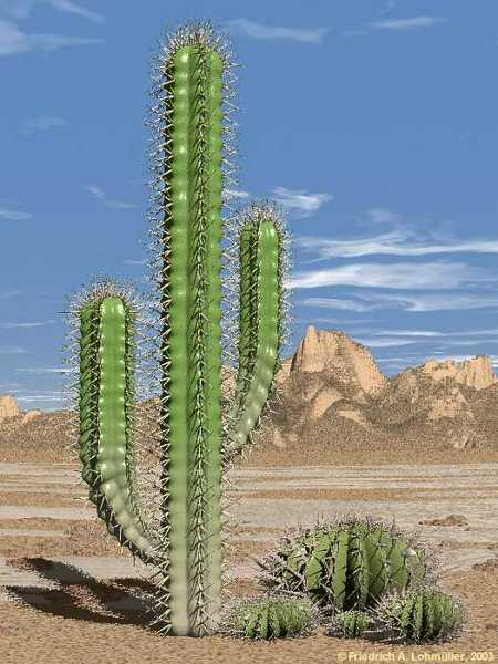 Thumbnail image for cactus pic.jpg